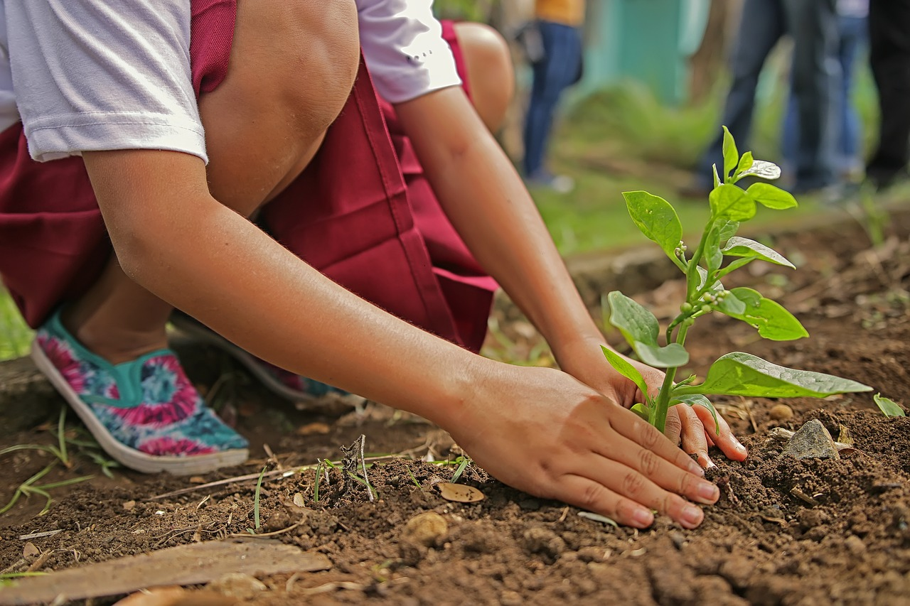 Agriculture In Iran : Implementation of 37 new 'Nursery Sapling Gardens' within the following year.