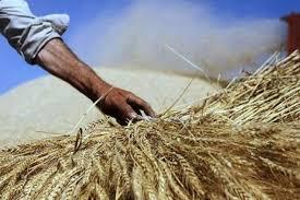 کشاورز ایرانی برعکس تمام دنیا؛  باید نهاده ها، ماشین ها و ادوات را گران بخرد، محصولاتش را ارزان بفروشد!